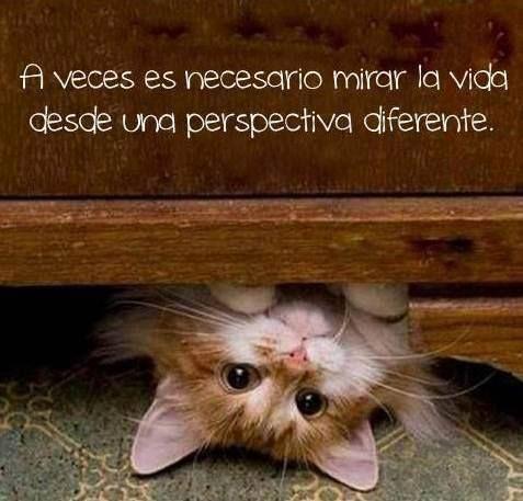 perspectiva..