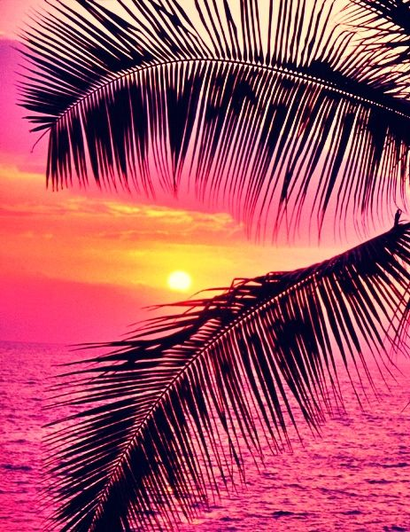 Pink sunset on crashing waves and palm trees. Click to shop swimwear by Matthew…