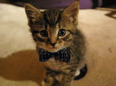 Cutest thing in the world!!