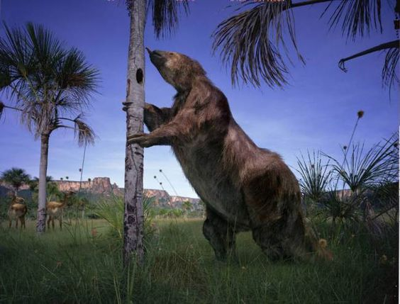 Megatherium, the giant ground sloth has no natural predators on the pampas  After being an isolated island for 30 million years, there was bound to be a clash of eco-systems when South America joined up with its northern neighbour. The native ground sloths and giant terror birds were joined by the incoming Smilodon