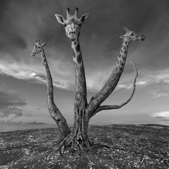 As fotografias surreais de Dariusz Klimczak