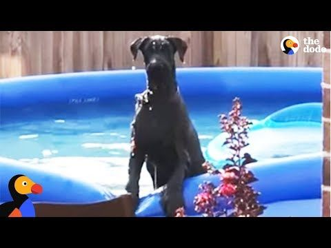 Dog Caught Sneaking Into A Swimming Pool The Dodo Youtube