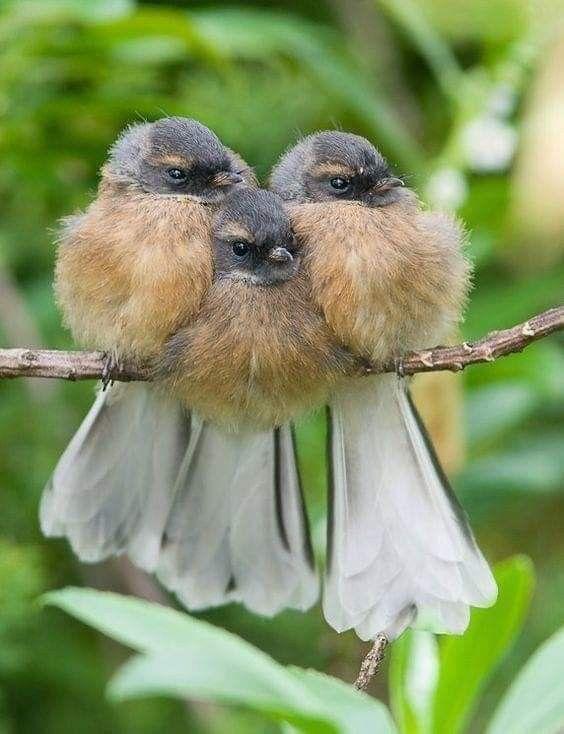 Pin By Vera Ramos On Passaros Aves Beautiful Birds Animals Pet Birds