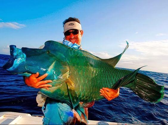 Maori wrasse cheilinus undulatus australia polynesia for Biggest fish ever caught