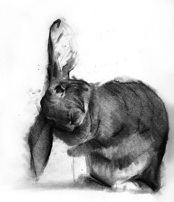"Benjamin Björklund,  ""Charcoal drawing of his rabbit"""