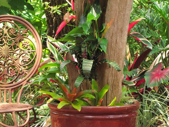 """Hoe and Shovel: Step by Step Guide to make this beautiful container garden. """"Bromeliads provide uniquely colorful, tropical texture to any Florida garden. Terrestrial bromeliads are an excellent ground cover. They multiply rapidly in the bright, filtered sunlight under my mature oak trees."""""""