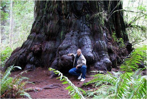Lauralin 112,62 m Ubicación: Humboldt County, South Tenedor Eel River, California, EE.UU. , Diámetro: 4,54 m