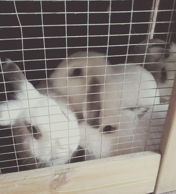 #cuterthankidchallenge  #lovethem #bunnies #rabbits #mybabies #mypets #pets #playtime by kirstyfisher15