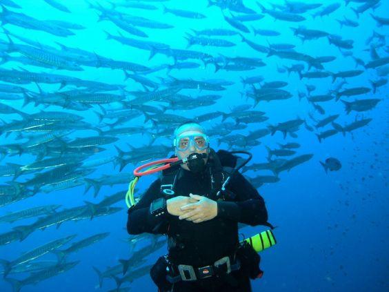 Un relitto sul fondale, come nei film. Ma il tesoro a bordo è lo spettacolo naturale dei pesci che hanno trovato lì un alloggio ideale.