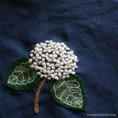 Hydrangea macrophilla