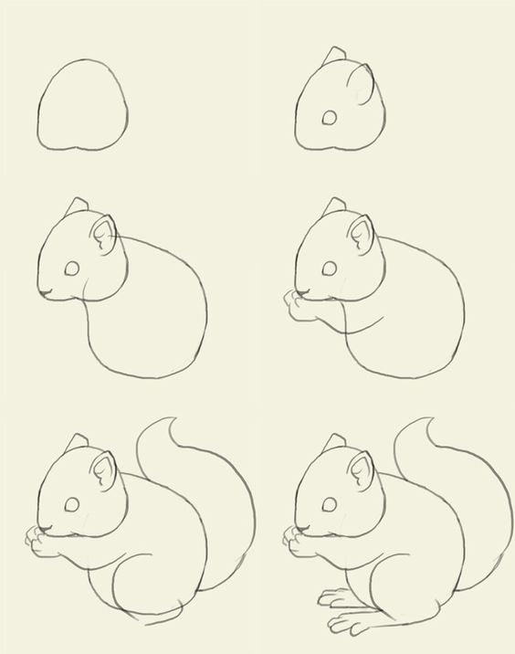 how to draw a squirrel  #Squirrel #AlphaGammaDelta #AGD