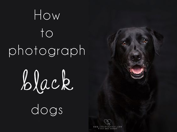 how to photograph black dogs