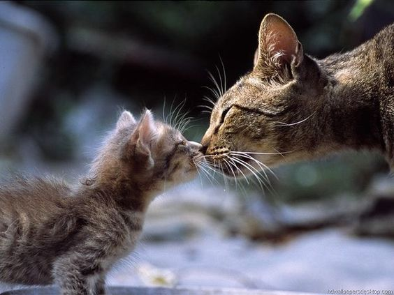 proud kitty parents