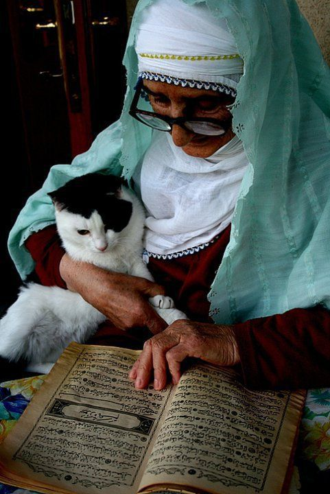 Image result for prophet muhammad and cats