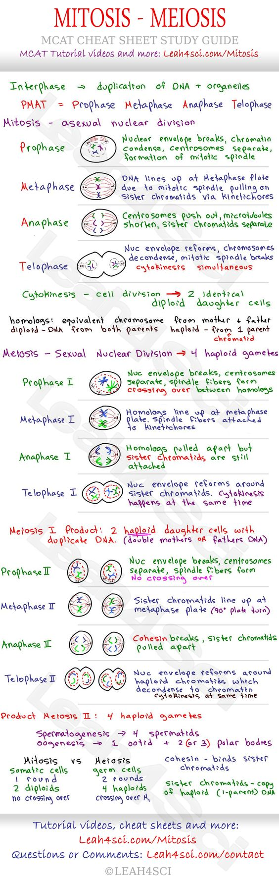 Mitosis Nd Meiosis Mc T Che T Sheet Study Guide Le Rn Wh T