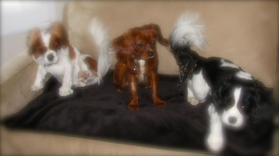 The clan. From the left: Lady, Lucy & Happy