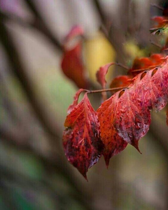 """minetaskinnn: """"Birazcık sonbahar...    Good night... İyi geceler..."""""""