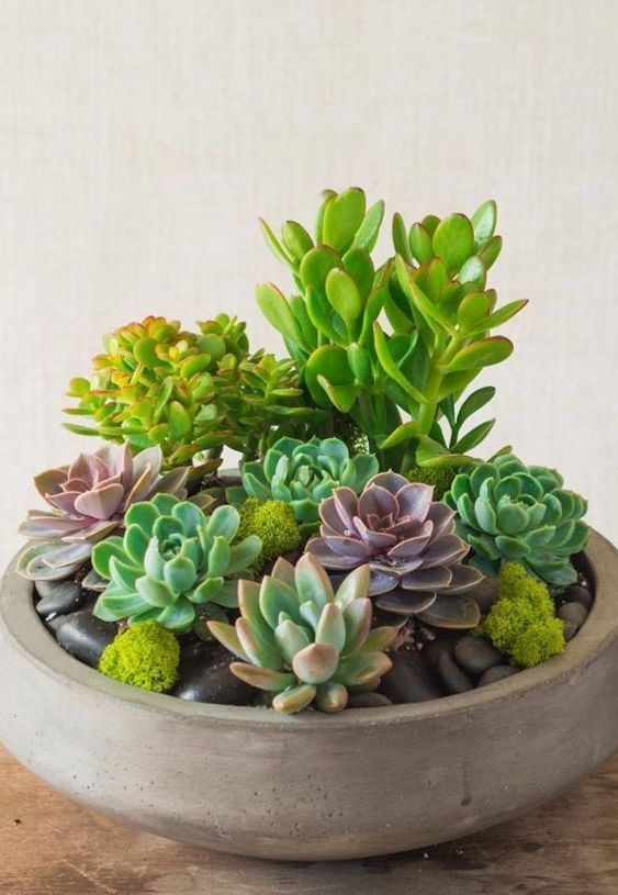 60 Charming Succulent Indoor Garden Ideas 2019 Page 9 Of 64 Soopush Succulents Diy Succulent Garden Diy Succulents