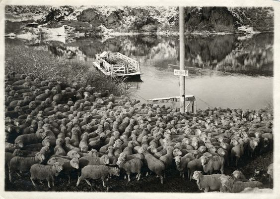 4. A traffic jam at the Idaho ferry, 1915