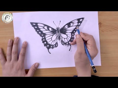 How To Draw A Butterfly In Pencil Step By Step كيف أرسم فراشة بقلم الر Butterfly Drawing Butterfly Drawing Images Drawing For Beginners