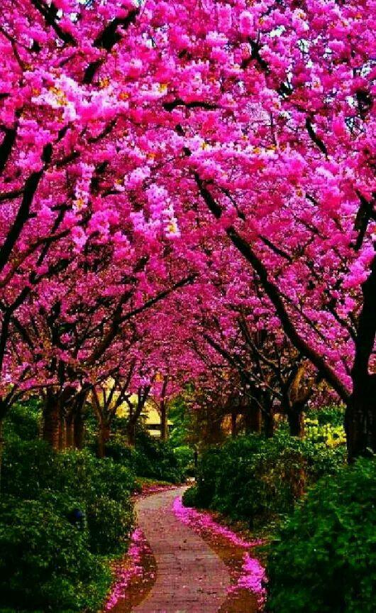 Pin By Chan On Paysages Beautiful Nature Beautiful Landscape Wallpaper Beautiful Gardens