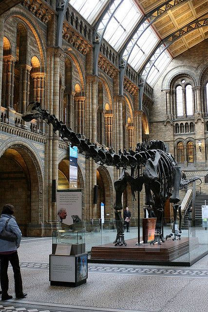 The Natural History Museum, London      posted by www.futons-direct.co.uk