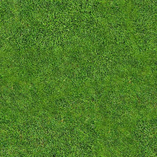 grass background texture - photo #34
