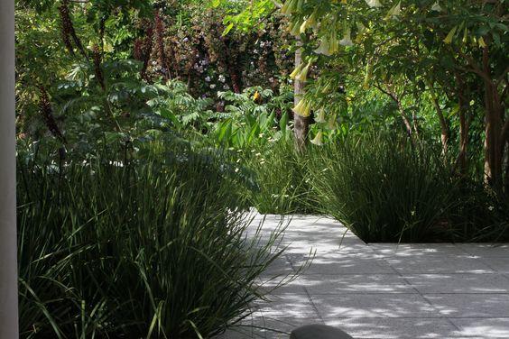 jardin sin pasto en Bajo Belgrano, Buenos Aires.    urban no lawn garden / tropical planting     valeria hermida - teresa zuberbuhler www.valeriahermida.com