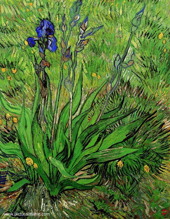 Another pinner: Van Gogh  - Iris  Vincent may have been thinking about the 15th century Flemish painter Hugo van der Goes when he started painting his series of flower paintings featuring the iris.