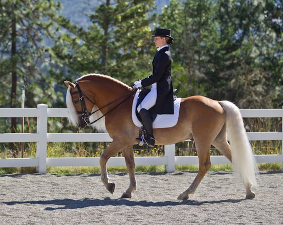 Love her light blond mane and tail! -TAB