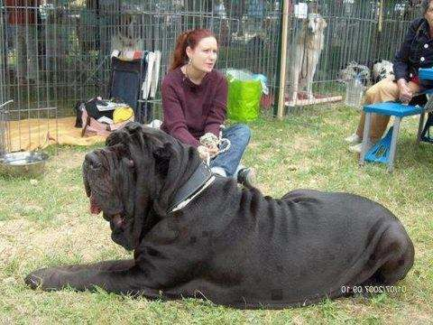 Th Biggest Dog Breeds