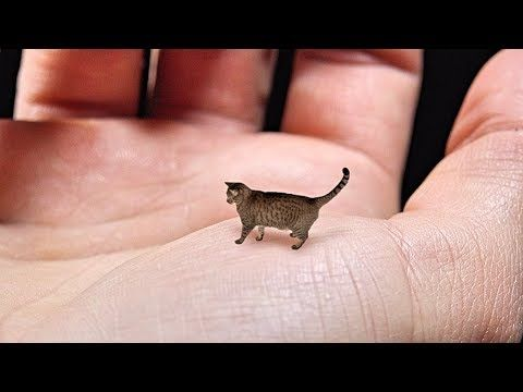 Meet Sparta The First Nano Cat In The World World S Largest Collection Of Cat Memes And Other Animals In 2021 Cutest Animals On Earth Tiny Cats Baby Cats
