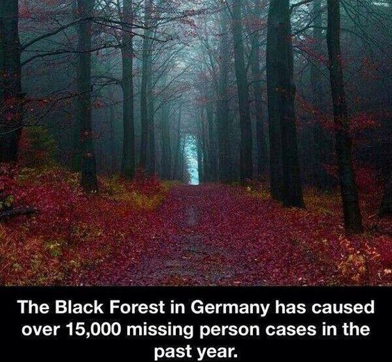 """I would walk into that Forest and yell """"HI SLENDERMAN"""" then walk out like nothing happened."""