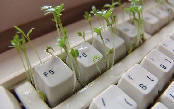 Coltivare una piantina... sulla scrivania! #ufficio #piante #polliceverde