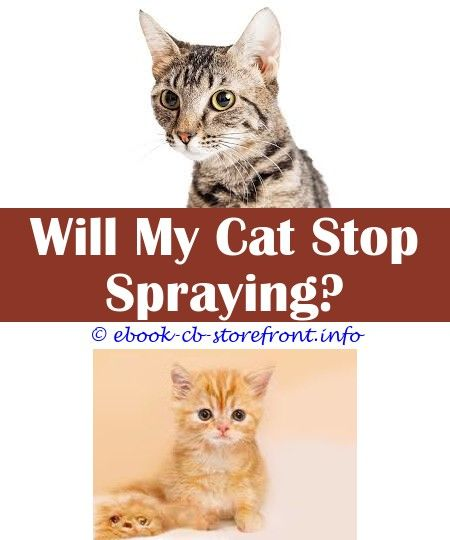 7 Spiritual Ideas Bitter Apple Spray Cats Spray To Make Cats Stop Scratching Furniture What Add To Water Spray To Deter Cats Can Fixed Male Cats Spray How To G En 2020