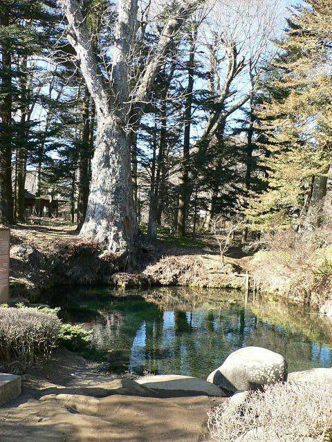 山梨県にある8つの池からなる、忍野八海をご存知でしょうか。実は天然記念物でもあり、世界遺産・富士山の構成資産の一部になっているんです。東京からは車で約100分でアクセスできる立地にある、美しすぎる忍野八海をご紹介します。