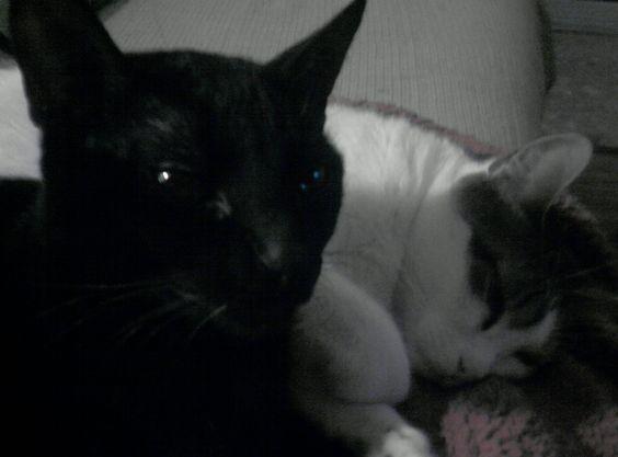 Cody Y Rita #gato #veterinario www.veterinariogatos.com