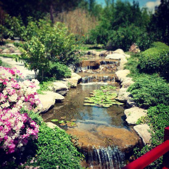 #JardinesDeMéxico, un bello lugar al que dan ganas de regresar una y otra vez. 🌹
