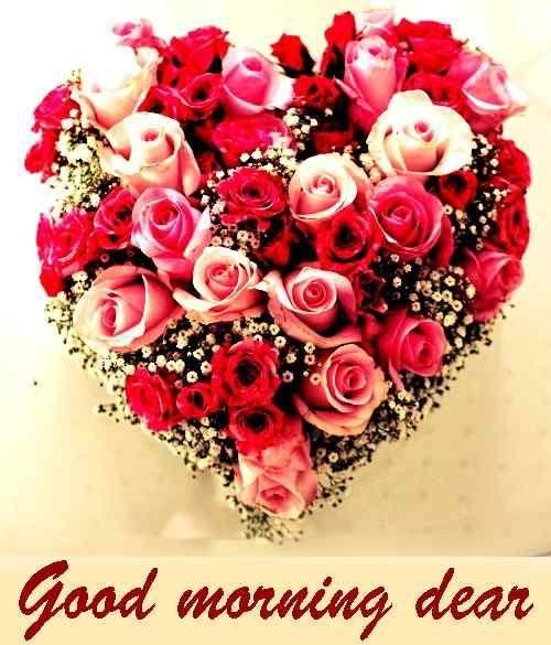 Description Flower Images Amazing Flowers Good Morning Flowers Flower wallpaper good morning