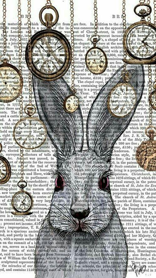 conejo image