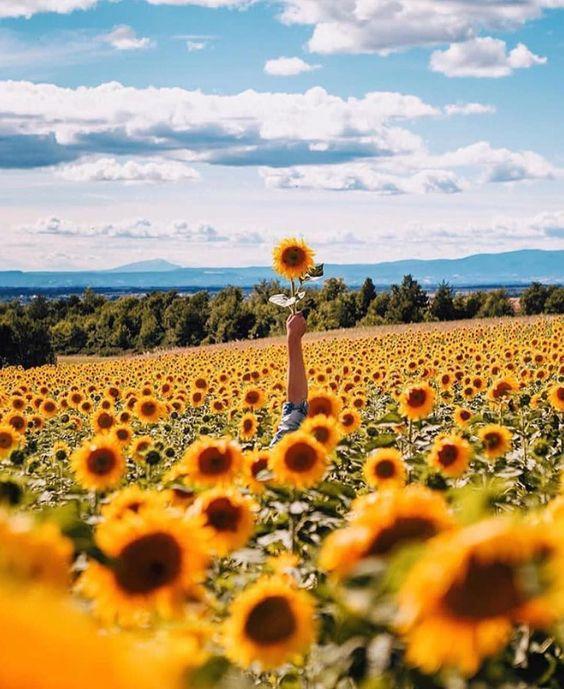 """""""Sunflower Sea / Photo by @sergeysuxov"""""""