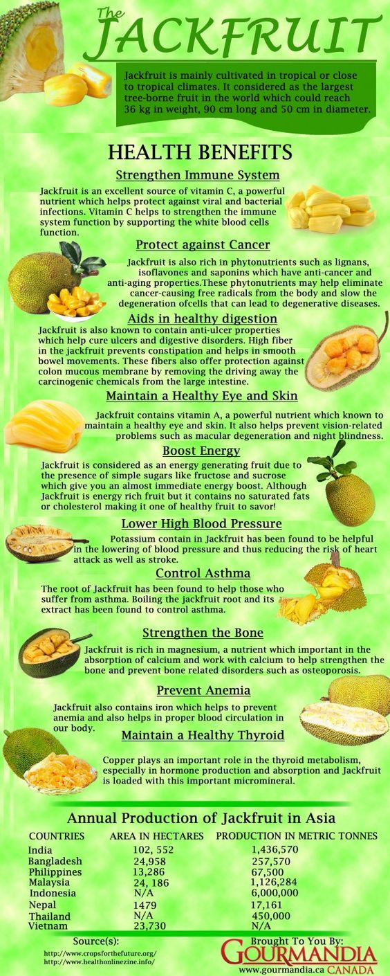 The jackfruit tree is well suited to tropical lowlands, and its fruit is the largest tree-borne fruit,[7] reaching as much as 80 pounds (36 kg) in weight and up to 36 inches (90 cm) long and 20 inches (50 cm) in diameter.: