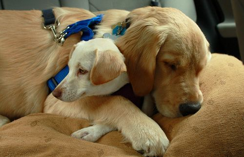"""""""You are my very best friend. They can't make you go home if you're stuck. I will hug you forever. Oh, look. It's naptime."""" """"But it's not my naptime!"""" """"Zzzzzz."""" """"Ugh, it's going to be a long afternoon."""""""