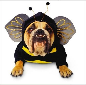 If we had a dog this is what he would wear on Halloween!!! HAHAHA!: Halloween Costume, Pet Costume, Bumblebee
