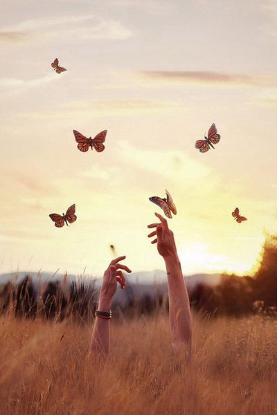 """""""We delight in the beauty of the butterfly, but rarely admit the change it had…:"""