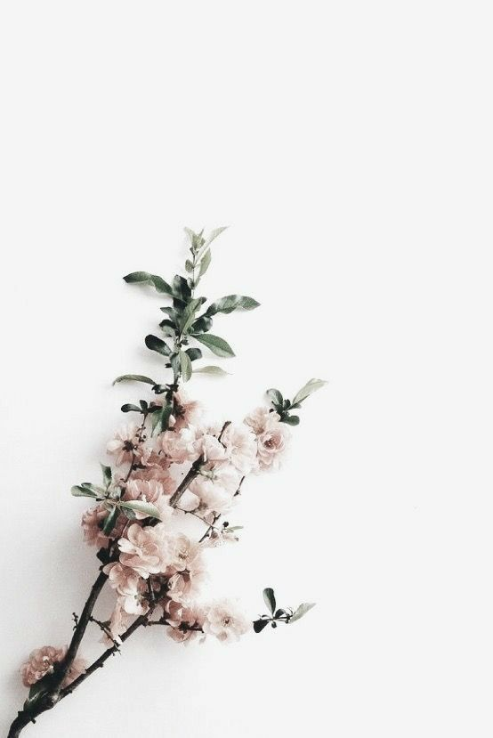 Pin By Kali Wright On Aesthetics Flower Wallpaper Watercolor