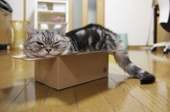 銀in the small box
