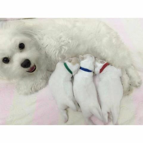 Collar Identificador De #Cachorros  Ayuda a identificar a los cachorros. Es un collar en velcro ajustable para #gatos y/o #perros #correascachorros #mimascota #PETs #lePETitStore