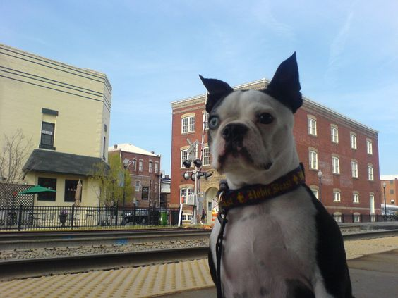 Frankie in Old Town Manassas