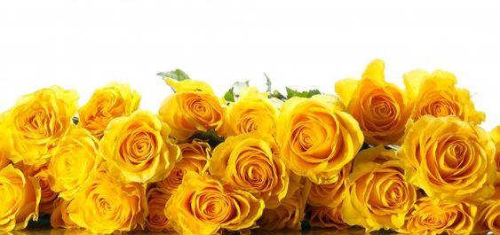 Ritual de magia verde para el dinero con rosas amarillas